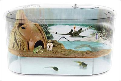 Dagobah Frog Habitat