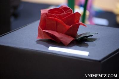 ousa sun rose (1 of 1)