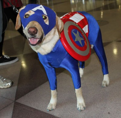 Arf! It's Captain America... photo by Christian Liendo