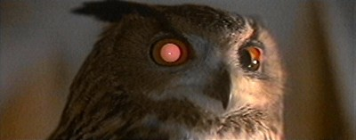 Blade Runner artificial owl